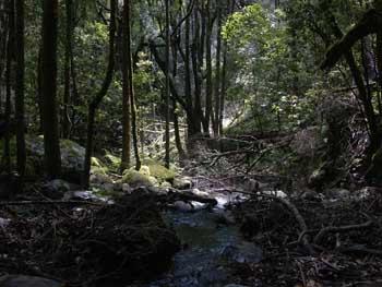El Cedro Forest, La Gomera