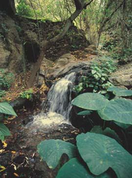 Barranco de los Cernicalos (Ravine)