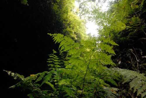 Cubo de la Galga Woods, Puntallana, La Palma