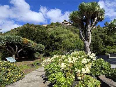 Jard n canario for Jardin botanico viera y clavijo