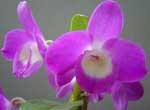 Centro de las Orquídeas