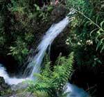 Las Nieves Natural Park