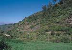 Reserva Natural Los Tiles de Moya