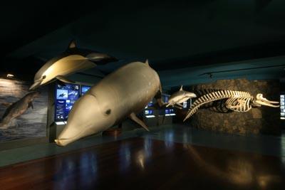 Canary Islands Cetaceans Museum
