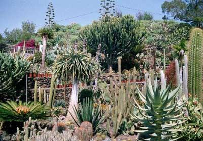 Palmex Cactus
