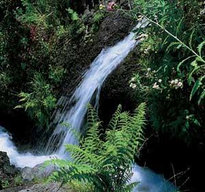 Las Nieves Natural Park, La Palma