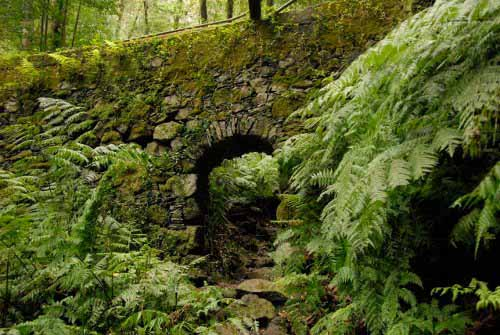 Bridge in Cubo de la Galga Woods