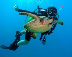 Diving in Lanzarote
